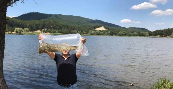 göletlere 120 bin adet sazan balığı yavrusu bırakıldı