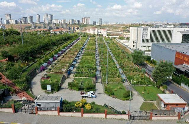 şehrin ortasında organik tarım