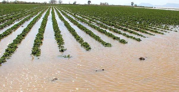 çay taştı ekili alanlar zarar gördü
