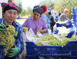 çekirdeksiz sultaniye üzümü'nün ihracat yolculuğu başladı