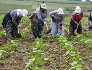 pandemiye rağmen tarımsal üretim değeri 1 yılda 2 milyar tl arttı