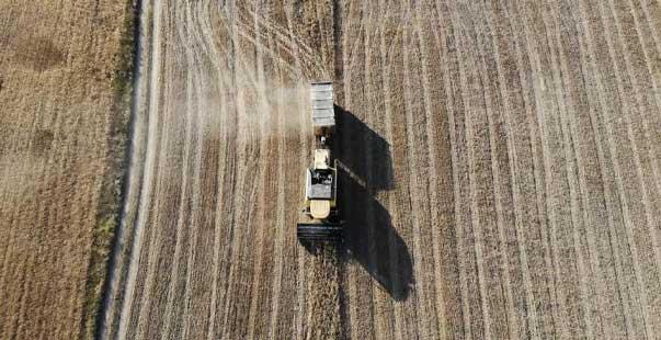 buğday rekoltesinde artış bekleniyor