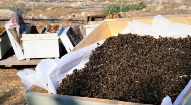 1 milyon 200 bin arı telef oldu