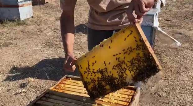 arılara fısıldayan adam, yaptığıyla ağızları açık bıraktı