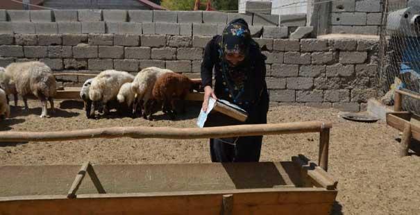 devletten hibe aldığı 40 koyunu 120'ye çıkarttı