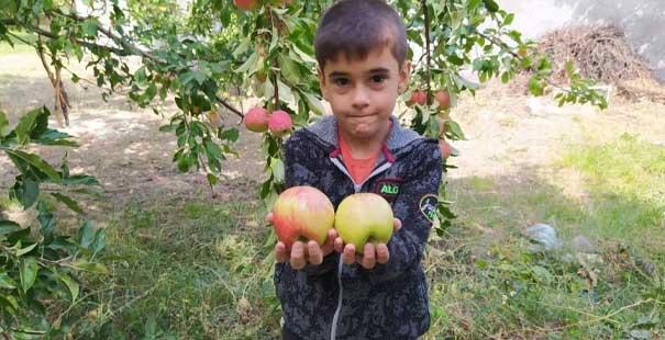 Bu elma tazeliğini aylarca koruyor