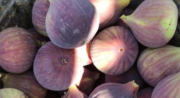 siyah incirin fiyatı çiftçiyi isyan ettirdi