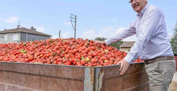 karacabey'in salçalık domatesi karaborsa