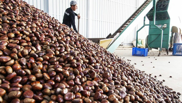 türkiye kestane ihracatında 50 milyon dolar hedefliyor