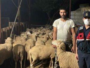 kaçak koyunlara jandarma müdahalesi