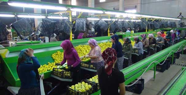 limon ihracat1