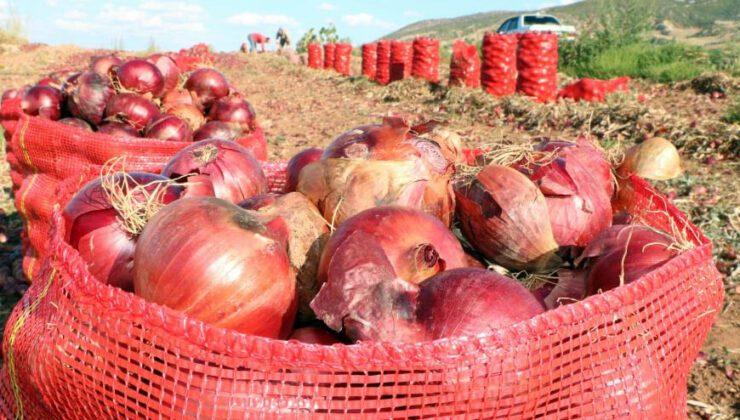 Soğan hasadı başladı, tarlada soğan 80 kuruş