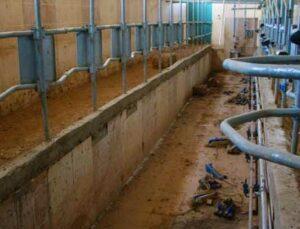 hırsızlar süt çiftliğinden 500 bin tl'lik malzeme çaldı