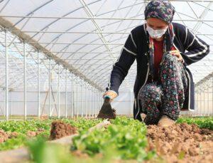 tarım işçisi kadın devlet desteğiyle sera sahibi oldu