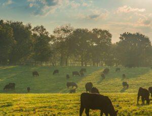 hayvansal gıdaların güvenliği ve hayvan besleme ilişkisi