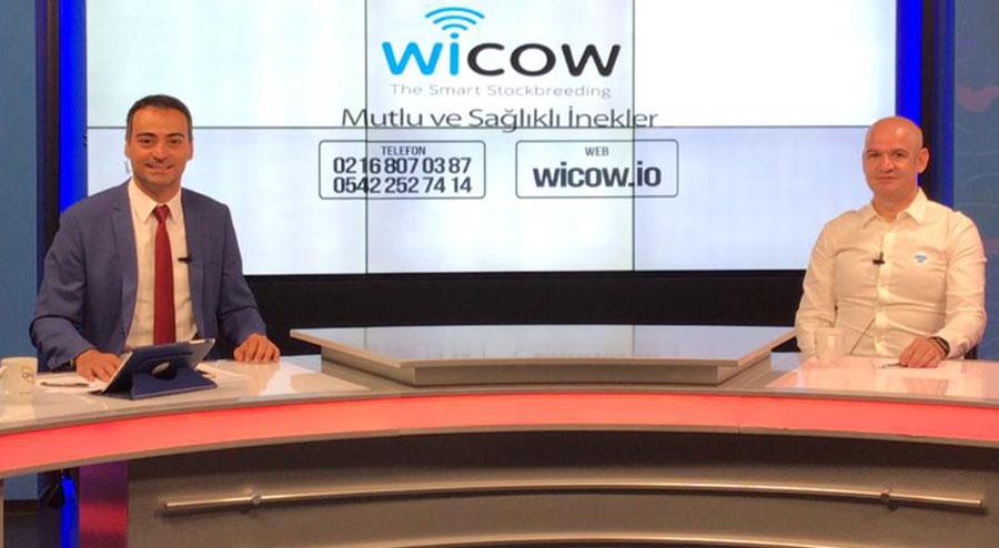 wicow