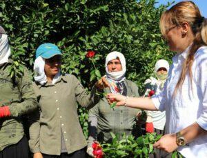 tarlada çalışırken gül alan kadınlar şaşırdı!
