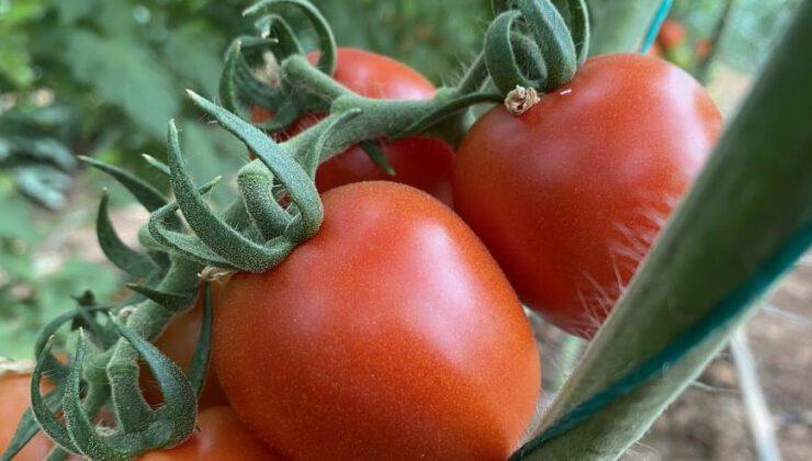 üreticiden 13 tl'ye çıkan kokteyl domates marketlerde 23 tl'ye satılıyor