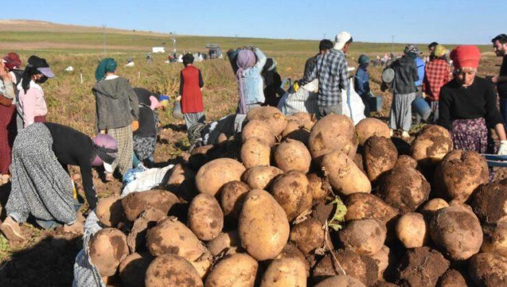 ahlat patatesinden 450 milyon tl gelir